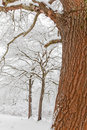 Free Snowy Forest Royalty Free Stock Photos - 8098958