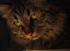 Free Cat Royalty Free Stock Photo - 8090025