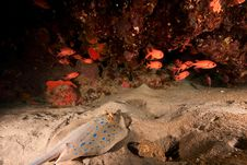 Free Coral And Fish Stock Photo - 8090550