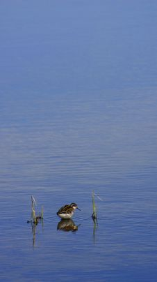 Free Lone Bird Stock Photo - 8090590