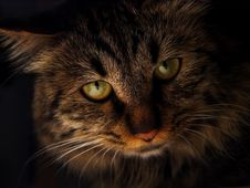 Free Cat Stock Image - 8090641