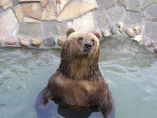 Free Bear Royalty Free Stock Photos - 8090878