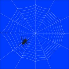 Free Spider Web Stock Photos - 8091273