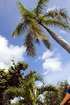 Free Tropical Palm Tree In Indonesia Stock Photos - 8091593