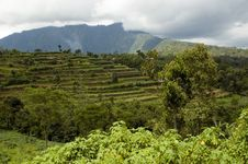 Bali Island - General Landscape Stock Image