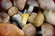 Free Close-up Of A Bunch Of Raw Fresh Eatable Mushrooms Royalty Free Stock Photo - 8091795