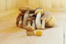 Free Mushrooms Standing On A Wooden Floor Royalty Free Stock Photos - 8091798
