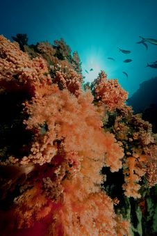 Free Softcoral Stock Photos - 8091833