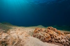 Free Stonefish Stock Images - 8092014