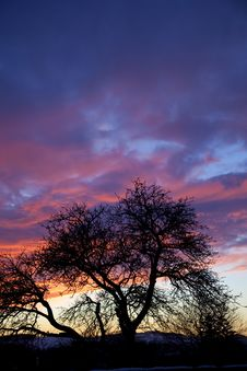 Free Country Sunset Tree Silhouette Stock Photography - 8092792