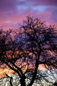 Free Country Sunset Tree Silhouette Royalty Free Stock Photo - 8092855