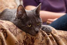 Free Grey Cat Stock Image - 8094221