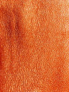 Free Skin Structure Royalty Free Stock Photos - 8094578