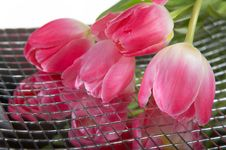 Free Tulips On Mirror Royalty Free Stock Photo - 8094795