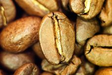 Coffee Been Close-up Stock Images