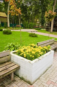 Free Yellow Flowers Stock Photos - 8096143