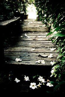 Free Pathway Stock Image - 8097311