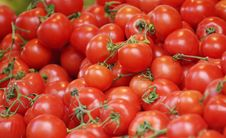 Free Fresh Tomatoes Stock Photography - 8097552