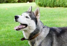 Free Dog Stock Image - 8099541