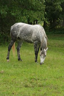 Free Mare Grazing Royalty Free Stock Images - 810289