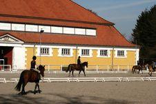 Free Danish Horse Farm Royalty Free Stock Photo - 812195