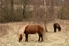 Free Danish Horses Royalty Free Stock Photos - 812218