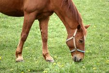 Free Danish Horses Stock Photo - 812470