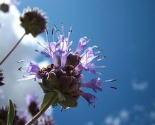Free Outline Of Flower On Blue Sky Stock Images - 812634