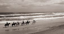 Free Danish Horses On The Beach Royalty Free Stock Photography - 814207