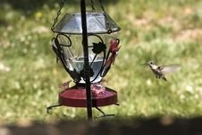 Free Hummingbird! Royalty Free Stock Photography - 815047
