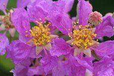 Free Purple Flowers In Bloom Royalty Free Stock Photos - 815788