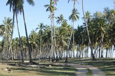 Coconut Beach Stock Image