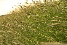 Free Grass In The Wind Stock Photo - 818900