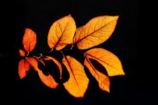 Free Shadows On Leafs Stock Photography - 819352