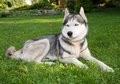 Free Dog Royalty Free Stock Photography - 8100307