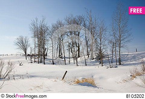 Free Winter Scene In Rural Northern Minnesota Stock Photography - 8105202