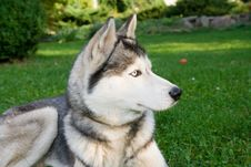 Free Dog Stock Image - 8100371