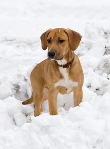 Free Dog Royalty Free Stock Photo - 8103785