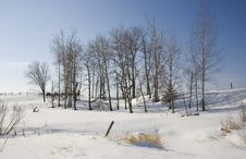 Free Winter Scene In Rural Northern Minnesota Stock Photography - 8105202