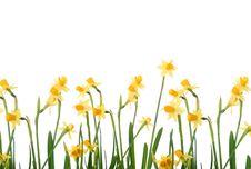 Free Garden Royalty Free Stock Photo - 8107025