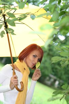 Free Yellow Leaf Stock Photo - 8107080