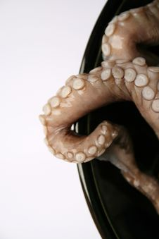 Free Octopus Stock Photo - 8107570
