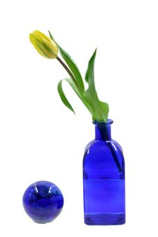 Free Tulips Royalty Free Stock Photo - 8108215