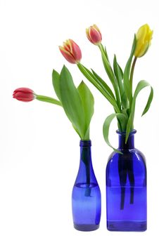 Free Tulips Royalty Free Stock Image - 8108276