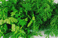 Free Dill And Parsley Stock Photo - 8113350