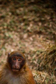 Free Monkey With Hope Stock Photography - 8110362