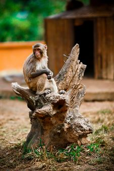 Free Monkey With Hope Royalty Free Stock Photos - 8110548