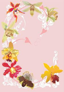 Free Color Orchid Curl Stock Photos - 8110733