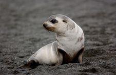 Free SEAL Royalty Free Stock Image - 8111866