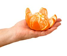 Free Hand Holding Tangerine Royalty Free Stock Photo - 8112155